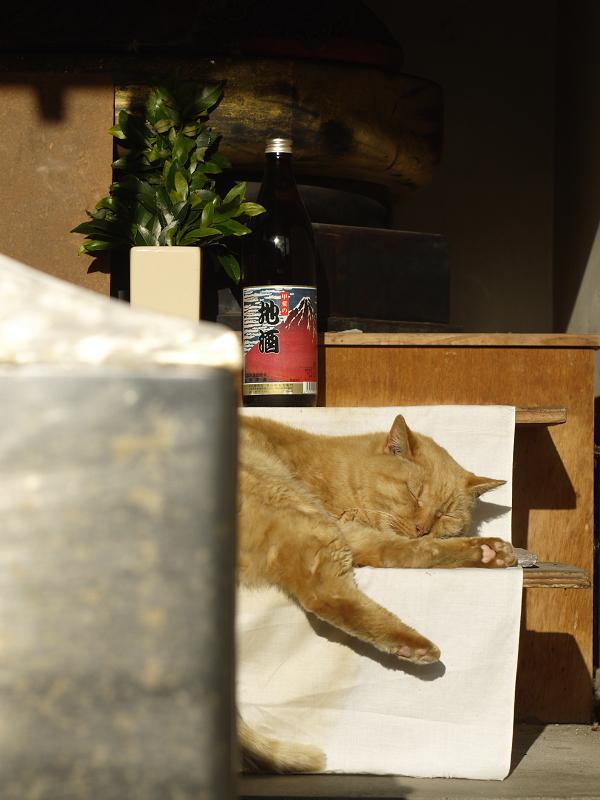 祭壇で寝てるネコ