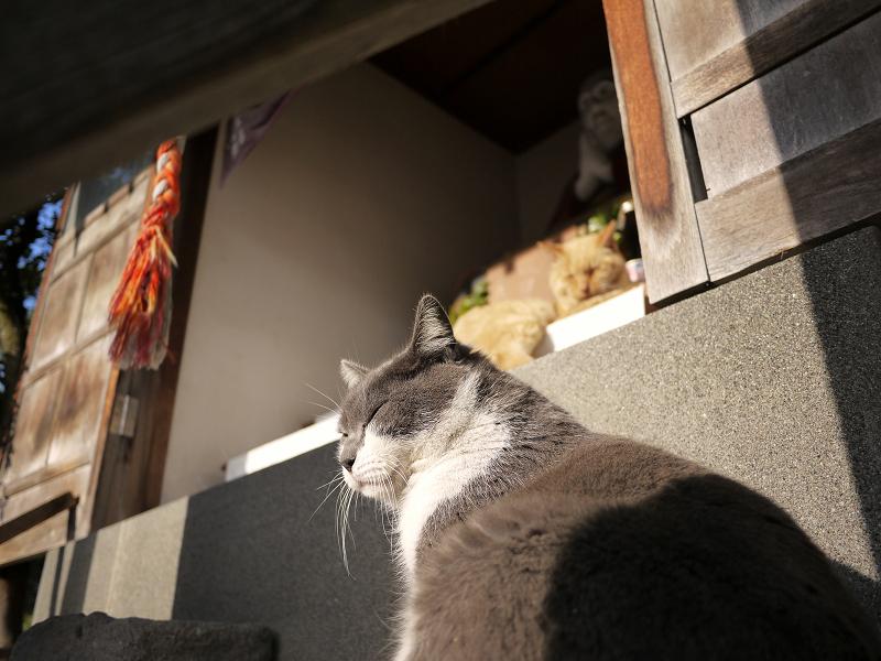 祭壇の猫をローアングルで