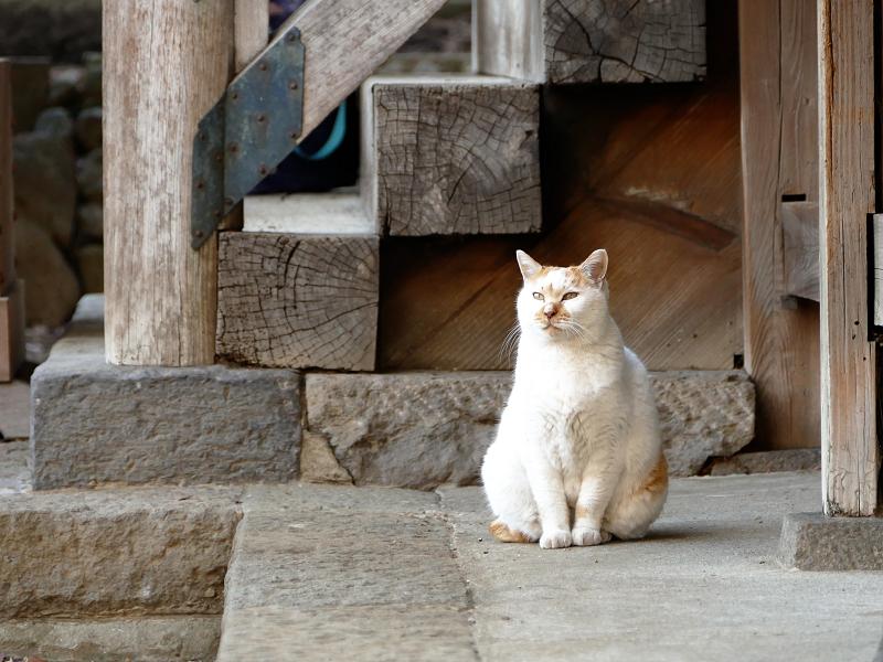 堂前から近づいて来る猫1