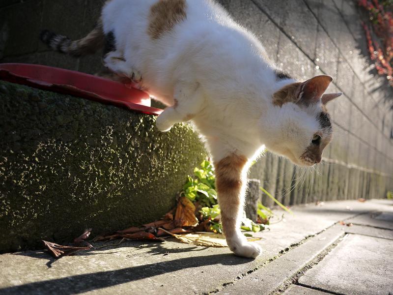 高い所から降りた猫
