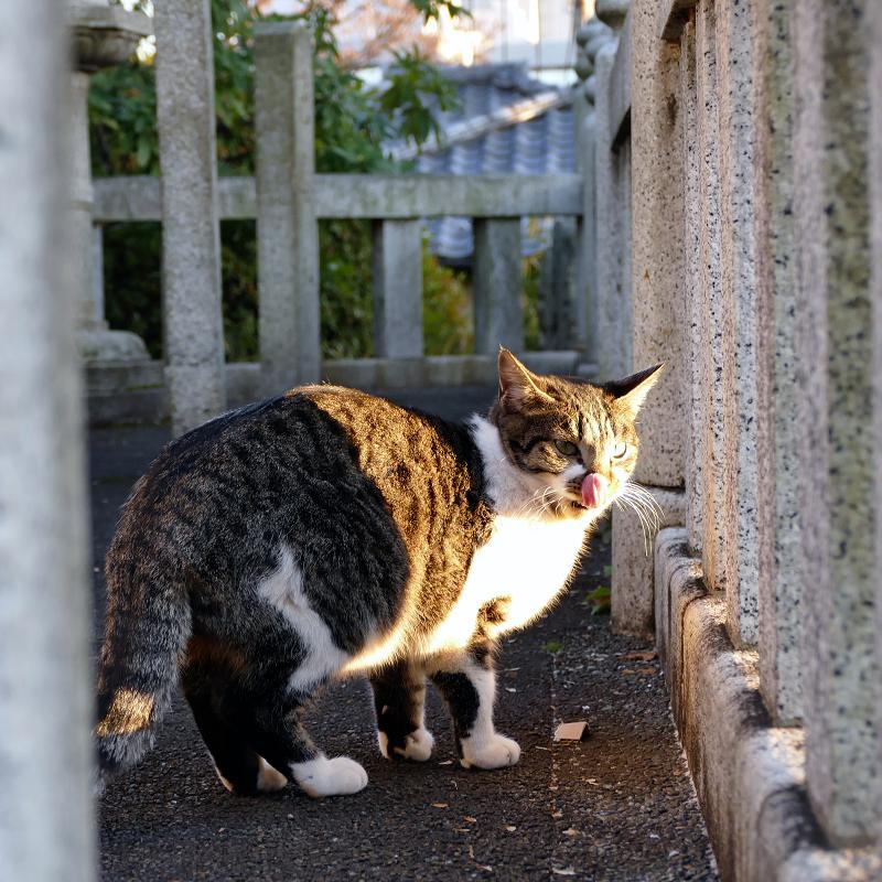 玉垣に包まれる猫