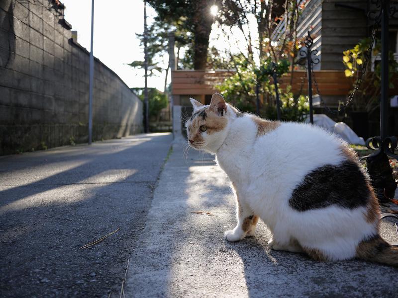 住んでいる路地と猫