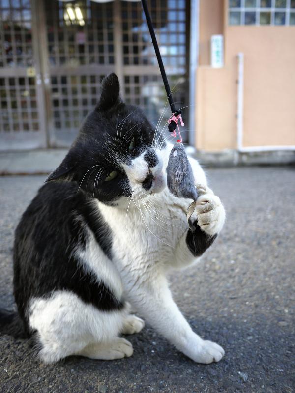 ネズミと遊ぶ大人猫1
