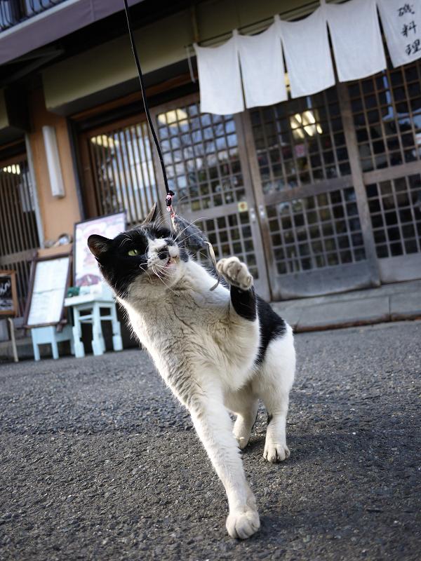 ネズミと遊ぶ大人猫