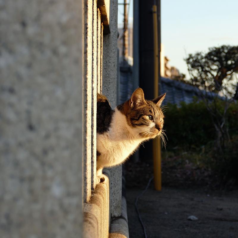 玉垣から顔を出すネコ1