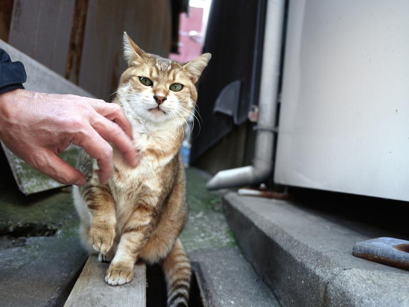 路地の間の可愛い猫