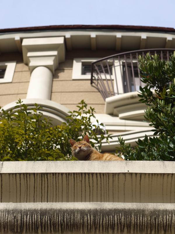 洋風な館と猫
