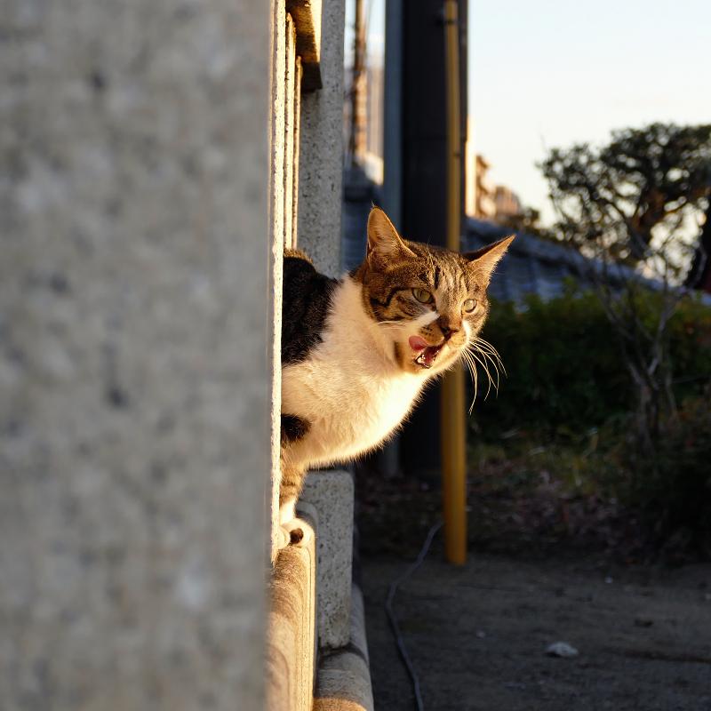 玉垣から顔を出すネコ2