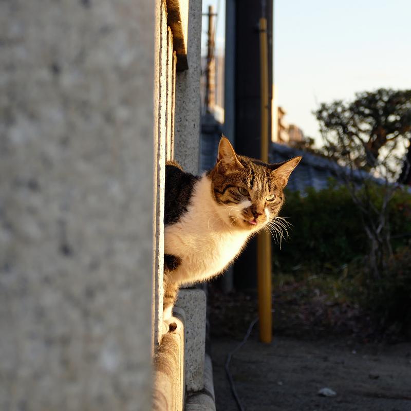 玉垣から顔を出すネコ3