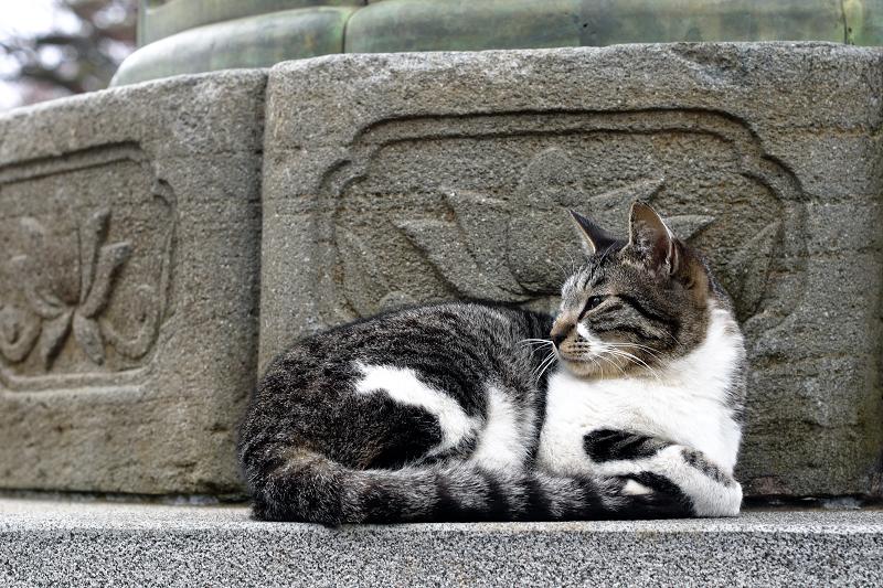 石灯籠と猫1