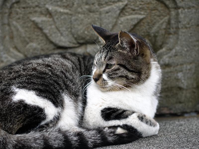 石灯籠と猫2