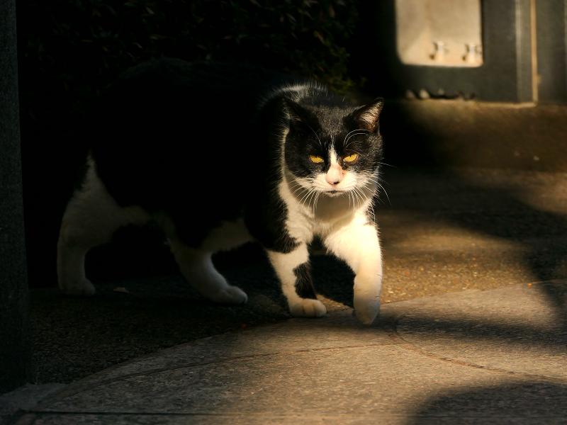 木漏れ日のなかで振り返る猫