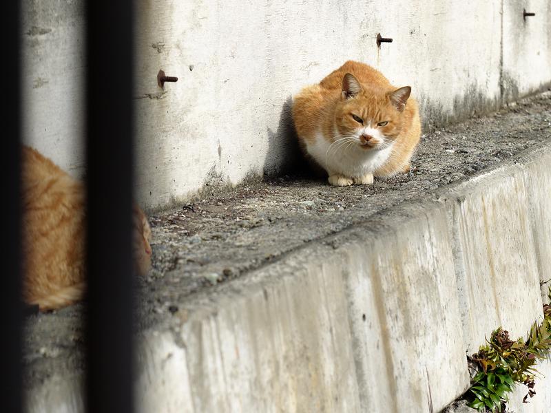 壁の横の茶白猫