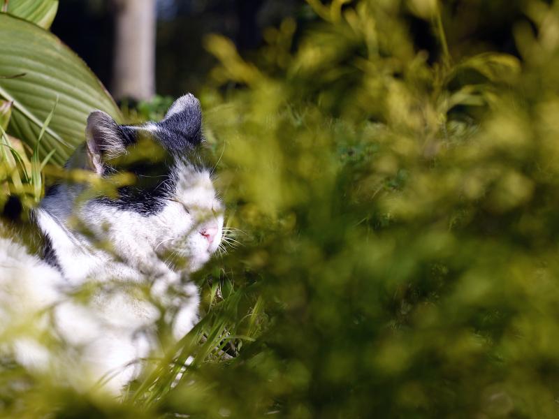夕陽と草むらの猫