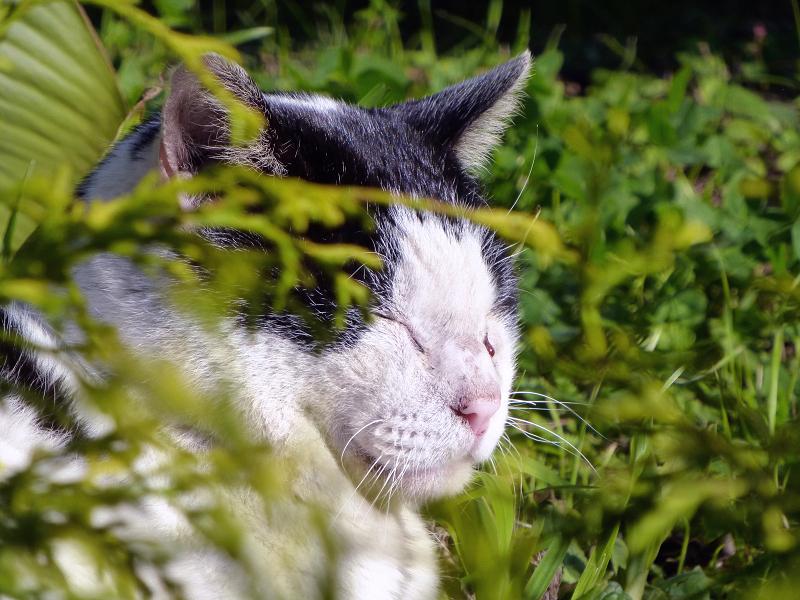 夕陽を浴びる草むら猫