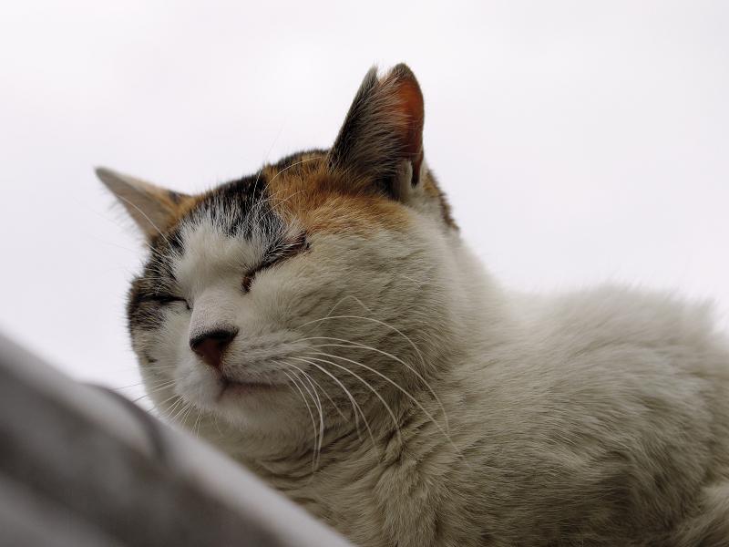曇り空の猫
