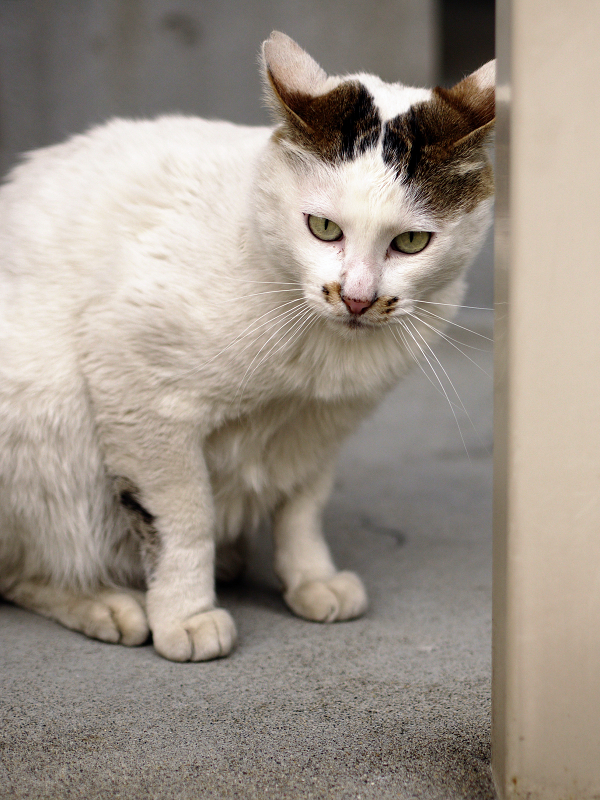 チョット身構える猫