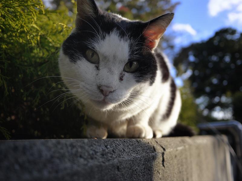 覗き込む草むら猫