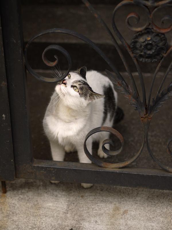 門扉のニオイを嗅ぐ猫