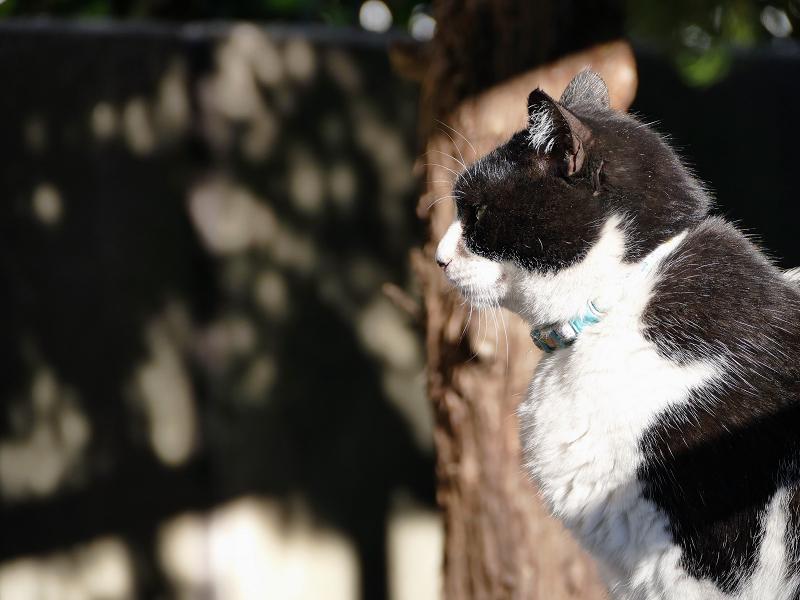 木漏れ日と猫の横顔1
