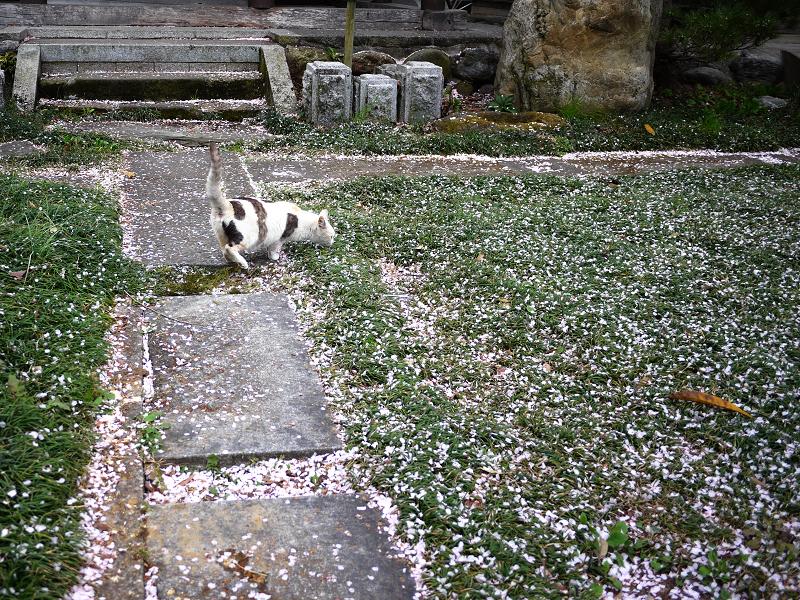 春の境内と猫2