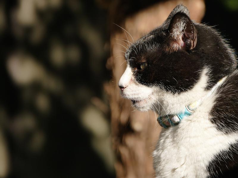 木漏れ日と猫の横顔2