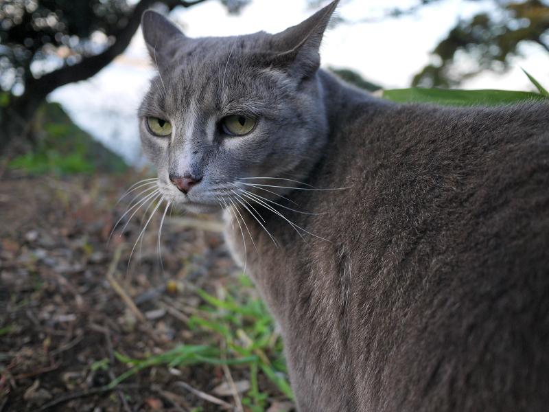 空き地で振り返る猫
