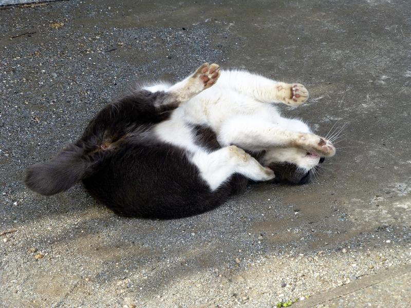 仰向け転がるネコ