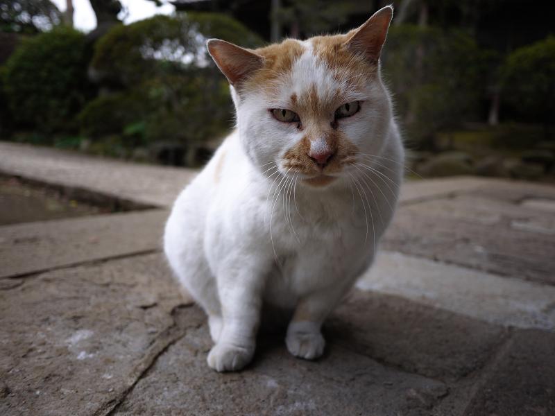 友だち猫の表情1