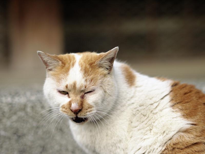 友だち猫の表情2