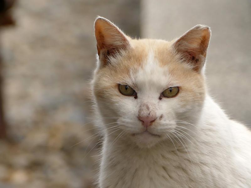 友だち猫の表情3