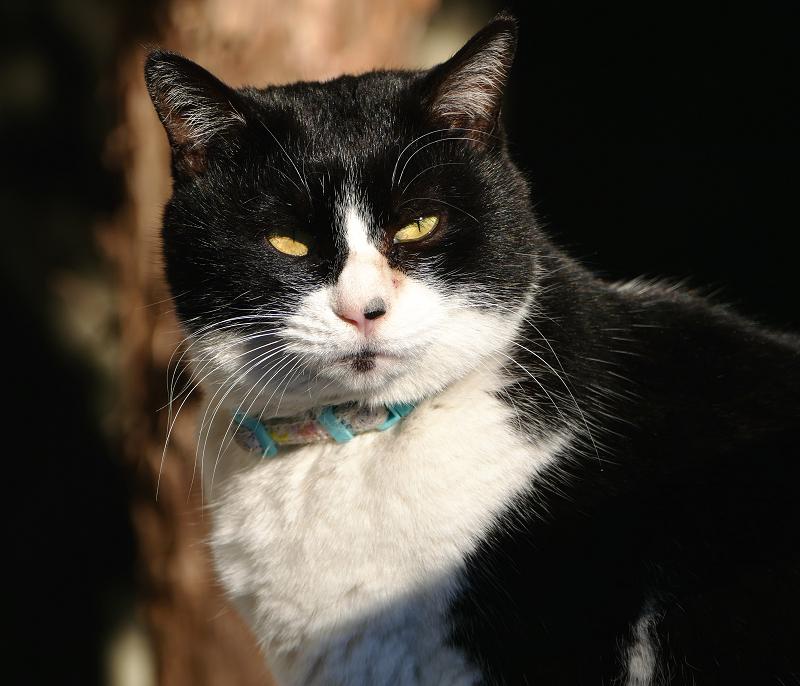 友だち猫のポートレート1