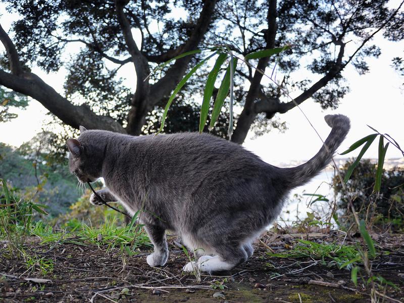 落ちた枝を噛む猫