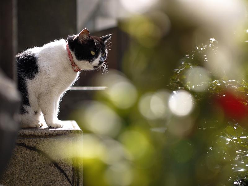 光と玉ボケの猫