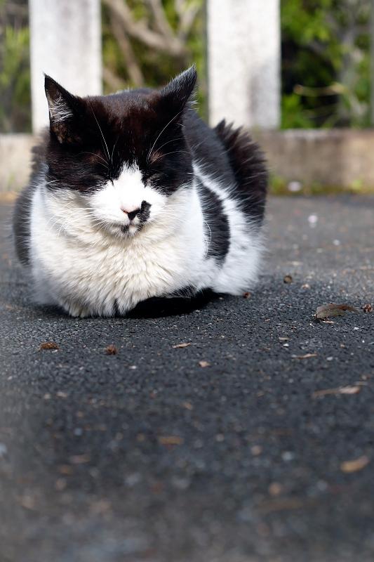 玉垣と黒白猫