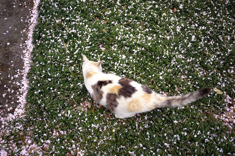 春の芝生と猫2
