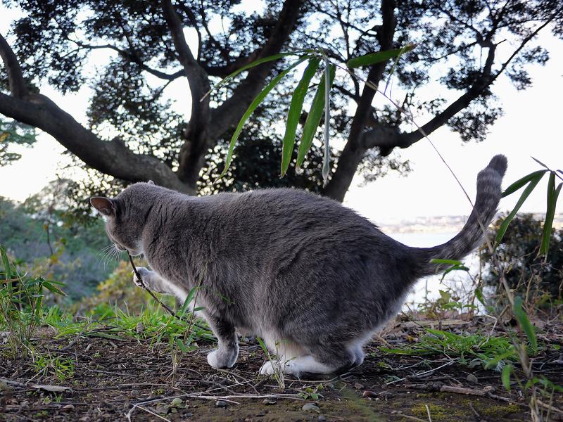 落ちてた枝をくわえる猫