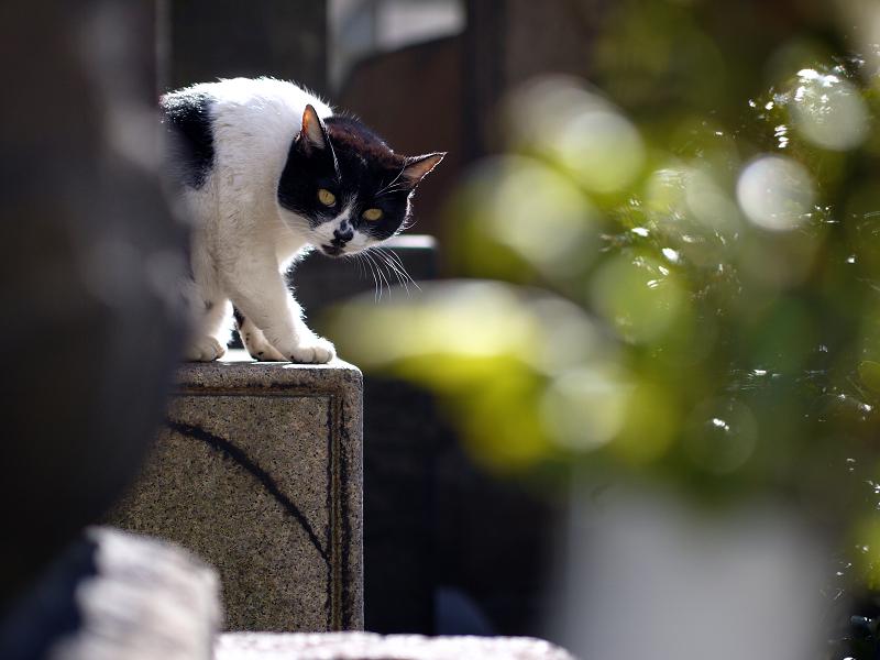 献花と玉ボケの猫