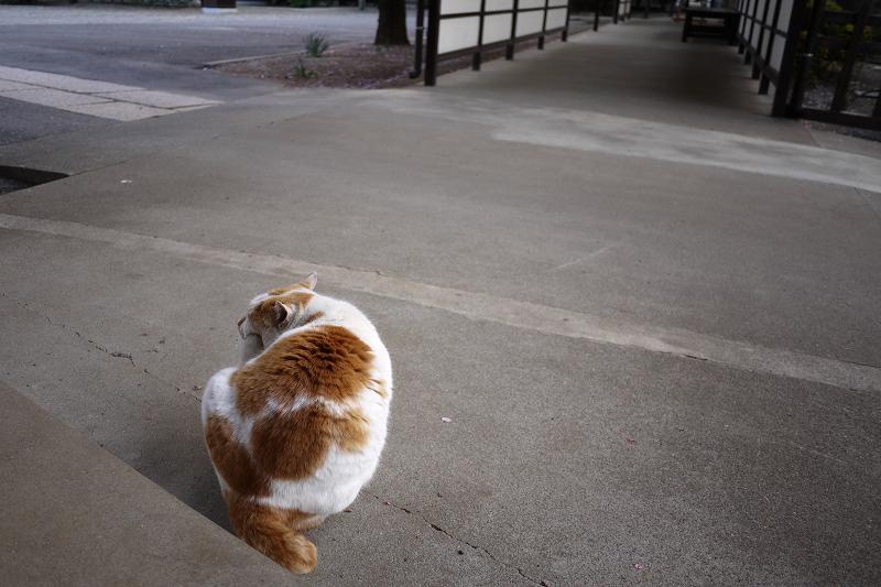 友だち猫の後ろ姿