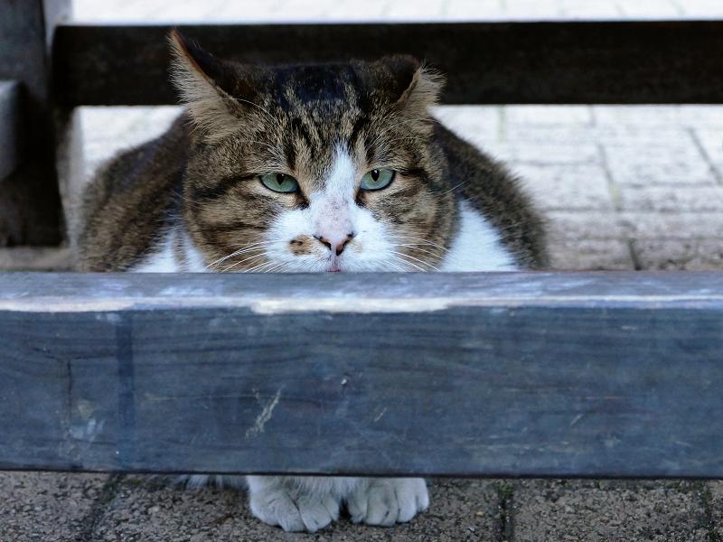 床几の下の猫