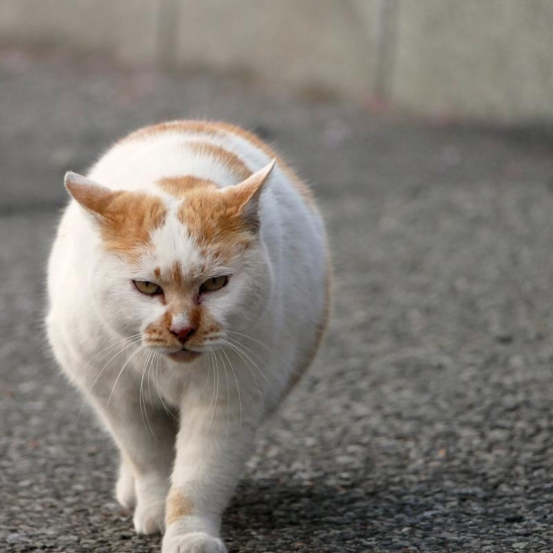 耳を立てて近づく猫2