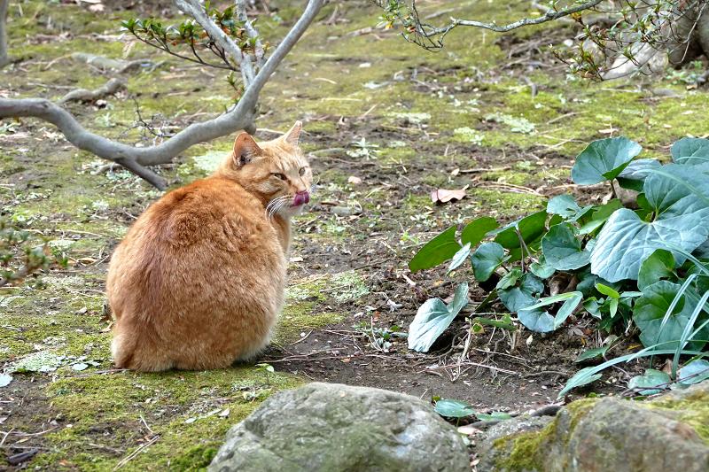 庭園で振り返る猫