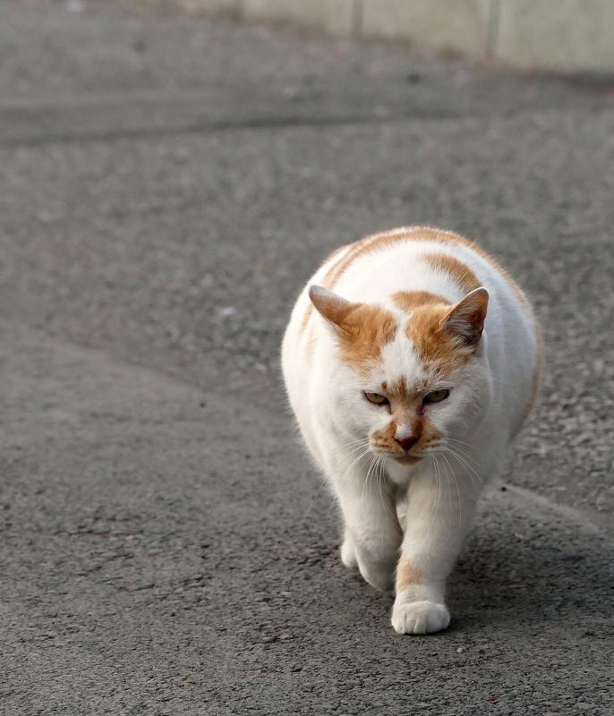 ズンズンと近づく猫1