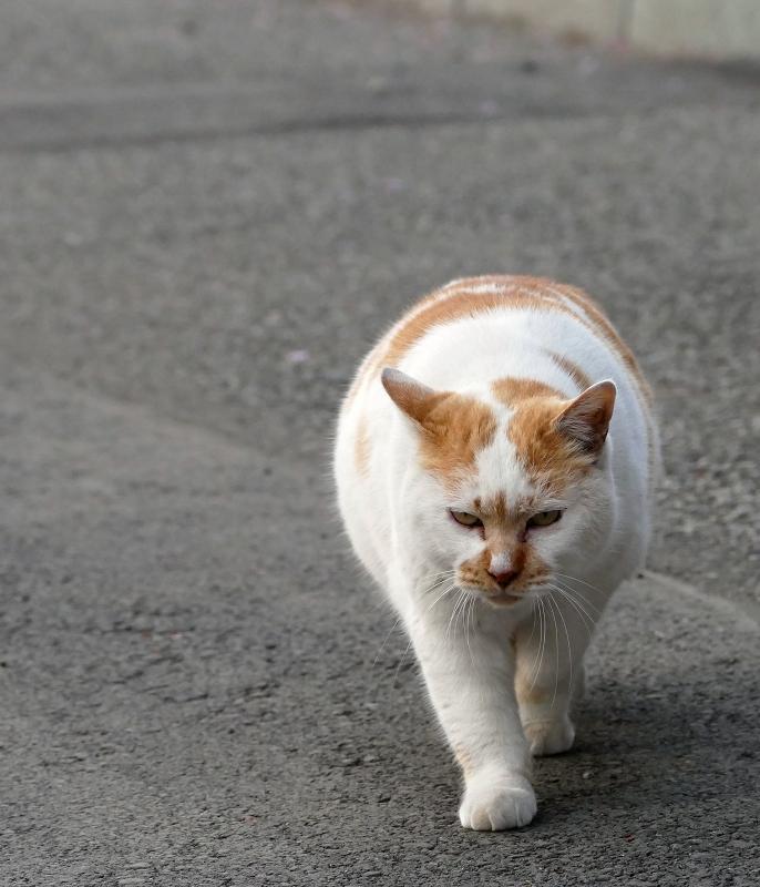 ズンズンと近づく猫2