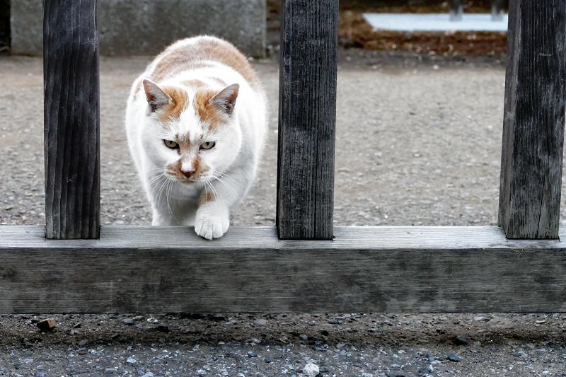 隙間を抜けてくる猫