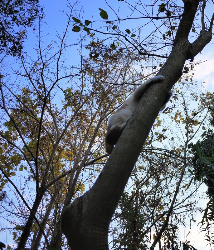 いきなり木に登った猫