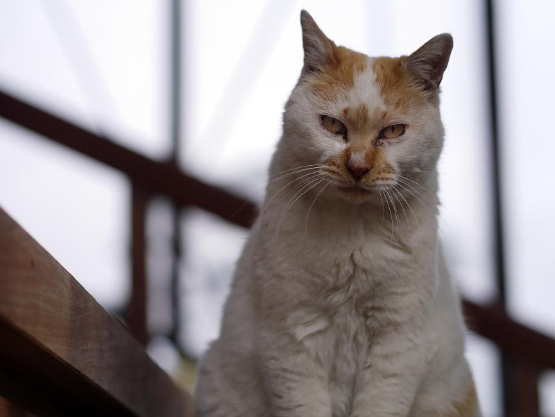 私のそばで睨む猫1