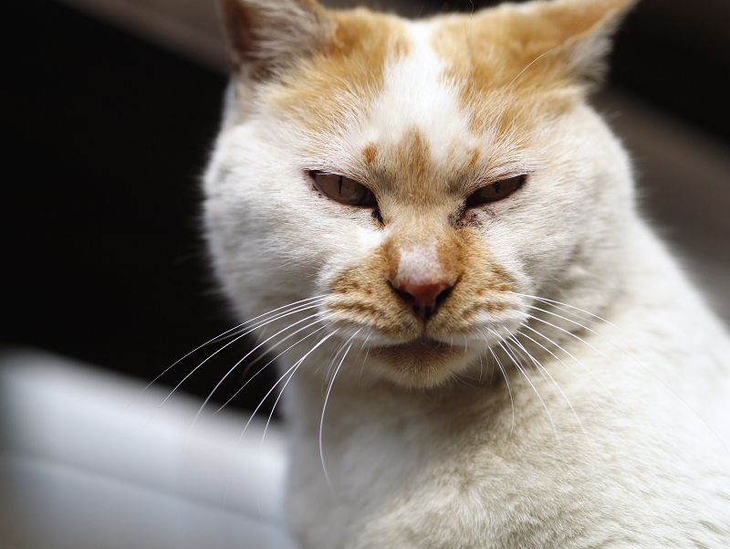 私のそばで睨む猫2