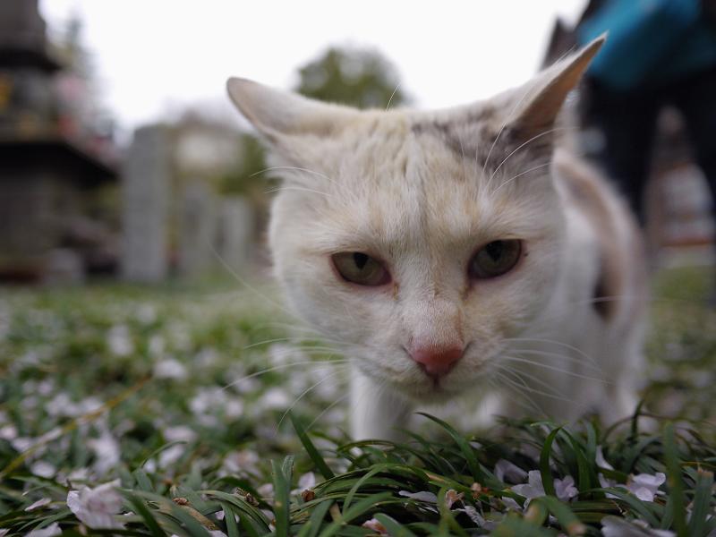 春の薫りを嗅ぐ猫2