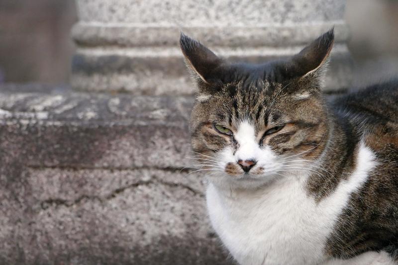 カメラを睨む猫